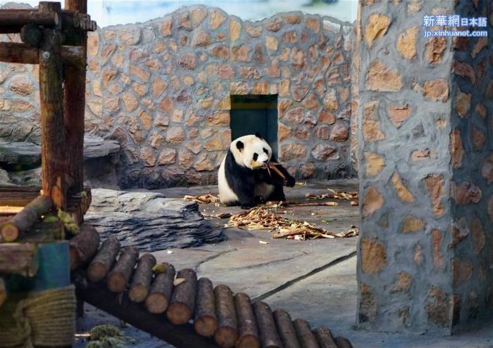 """(社会)(3)四只大熊猫""""做客""""河北"""