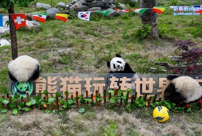 """(新华视界)(1)熊猫""""足球赛"""" 助威世界杯"""